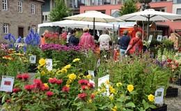 Grüner Daumen nach oben: Das achte Friedewalder Gartenfest lockt ab Freitag