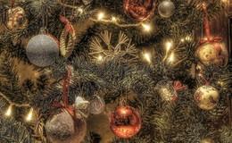 Wohin mit dem alten Weihnachtsbaum? - Wertstoffhof oder Biotonne