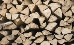 Land unterstützt Gründung von Holzverkaufsorganisationen