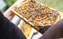 Bienenwagen geklaut, aber wieder aufgetaucht
