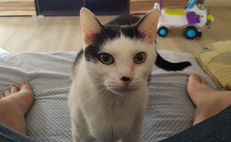 Familie wieder vollzählig: Kätzchen Flummi ist wieder aufgetaucht