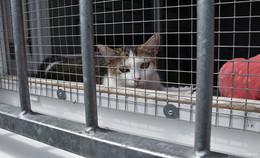 Zwinger statt Strand: Zahlreiche Haustiere in den Sommerferien abgegeben