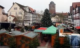 Es werde Christbaum: Grünes Juwel für den Weihnachtsmarkt gesucht