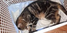 Verletzte Katze in Nüst gefunden- Wer kennt das Tier