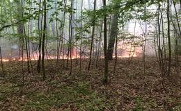Wind entfacht Feuer immer wieder: 1.000 Quadratmeter in Brand