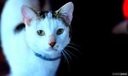 Katze in Steinau zugelaufen