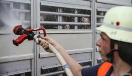 Ferkel-Transport durch Europa in brütender Hitze - Feuerwehr kühlt Tiere