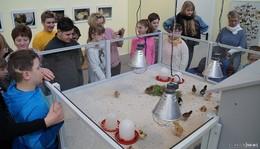 Ausstellung Vom Ei zum Küken in der Kinder-Akademie Fulda