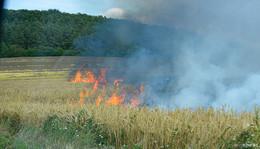 Brennendes Weizenfeld in Oberrode - Einsatz für die Feuerwehr
