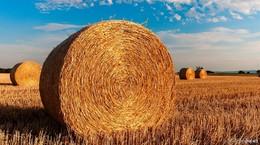 Dr. Jens Mischak: Man schneidet der Landwirtschaft ins Fleisch