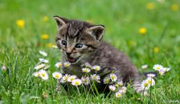 Miau! Wer hat den schönsten Stubentiger? - Leserbilder