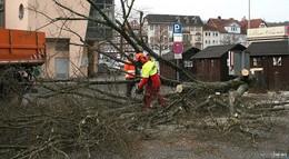 SPD will neue Linden am Lollsfeuer - Stadtpolitik muss Zeichen setzen