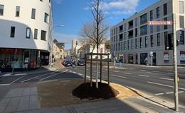 Ersatz für gefällte Trauerweide: Neuer Baum gepflanzt