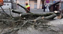 Nach dem Baumfrevel am Marktplatz: Stadt Bad Hersfeld setzt Belohnung aus