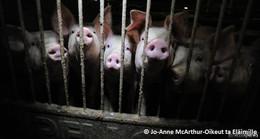 Tierschutzbund bringt umstrittene Abgabe auf Fleisch ins Gespräch