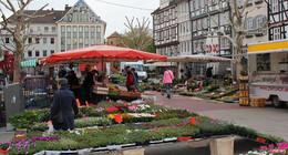 Ab Freitag wieder Wochenmarkt auf dem Linggplatz