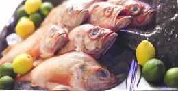 Seeteufel, Hummer und Rotbarsch: Fisch-Tasting in der Waldgaststätte Praforst