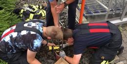 Feuerwehr rettet einen Igel vor dem Tod