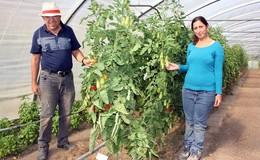 Zu Besuch in der Gärtnerei: Wo das Miteinander wächst und gedeiht