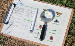 Der NABU Hessen lädt zum Insektensommer ein