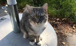 Katze Else wird seit Mittwoch vermisst
