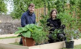 Britisches Rätsel im Schaugarten - noch sind die Blüten geschlossen