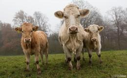 Initiative Rhöner Bio-Heumilch - Bauern gesucht!